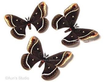 Paper Moths, Paper Moth Cutouts, Realistic paper moths, Calleta moth