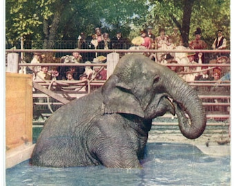 Elephant Bathing Lincoln Park Zoo Chicago Illinois 1908 postcard