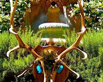 """SALE - Huge Artistic Elk Scull - Title: """"Nature's Royalty"""" A New Genuine New Mexico Majestic Elk"""