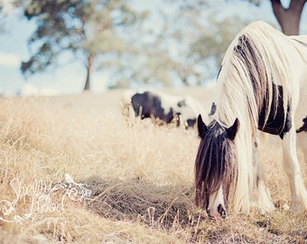Grazing Horse Gypsy Print - Equine Art - Farmhouse Decor - Horse Decor - Horse Photography Print - Fine Art Wall Hanging - Rustic Decor