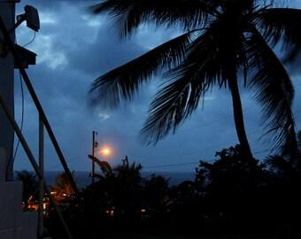 Caribbean Art - Palm Print /  Palm Art - Tropical Art / Tropical Print / Tropical Wall Art - Summer Art / Summer Gift - Fine Art Photography