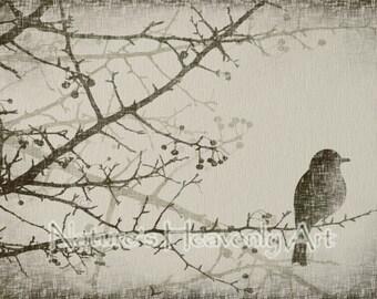 Winter Tree Art 5 x 7 Print, Old Rustic Look Bird Wall Art, Natural Earthy Colors, Bare Tree Branch Bird Art Print (21)