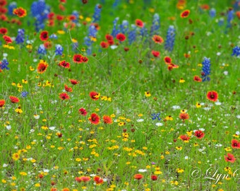 Wildflowers, Landscape photography, Texas, Hill Country, spring, Western, flowers, bluebonnets, fine art, wall art, rustic