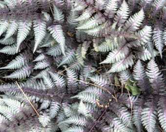 Nature photography. Multicolor fern. Photography art.
