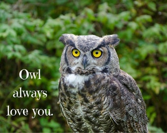Owl Always Love You Photo Greeting Card, 4x5 miss you cards blank inside just because, love you card, encouragement care love anniversary