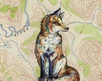 Fox art on topography map, Archival print, wildlife illustration, animal print, wall art Fox illustration, fox painting