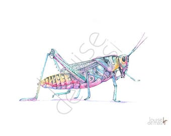 Grasshopper print of watercolor painting, GH23017, 5 by 7 size, Grasshopper watercolor painting print, Insect print, art for baby, nursery
