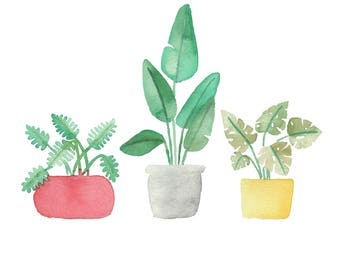 Tropical Plants, Bird of Paradise, Philodendron, Monstera, Watercolor Plants, Potted Plants