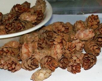 Hickory Mini Pinecones