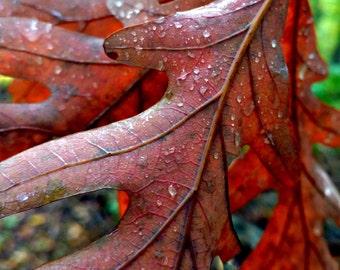 Red Autumn Leaves, Red Autumn Decor, Leaf Print, Leaf Art, Fall Print, Autumn Photo, Fall Decor, Red Decor, Nature Photo, Fall Raindrops