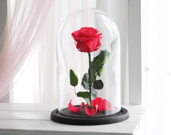 Beauty and the beast rose (Large), Forever rose, forever pink rose, Enchanted Rose, rose in glass, preserved rose, five  year rose