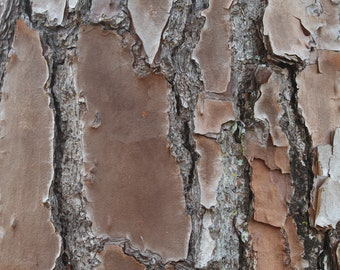 Rugged Industrial Shot of Tree Bark (Digital File)