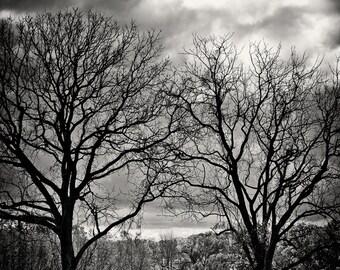 Landscape Photography - Tree Path - None Such Farms, Bucks County, Pennsylvania -  8x12