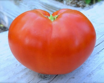 SALE! Beefsteak Heirloom Big Beefsteak Tomato Seeds Rare Grown To Organic Standards