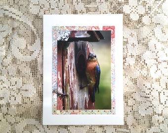 Bluebird note card, 1