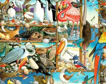 Birdwatching Multi from Elizabeth's Studio