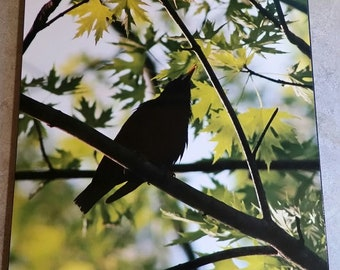 Singing Bird in the Tree Top 8x10 Photograph Wood Panel
