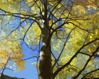 Fall Aspen Greeting Card - Box of 8 by DENISE SLOAN