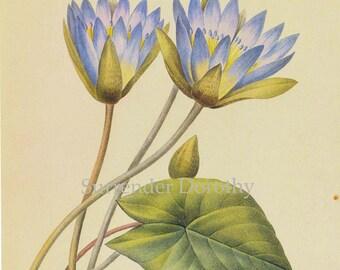 Blue Lotus Waterlily Nymphaea Caerula Flower Vintage Poster Print Redoute Botanical Lithograph 36
