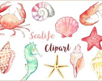 Watercolor Seashells, Seashell Clip Art, Nautical Clip Art,  Seahorse Clip Art, Watercolor Seahorse