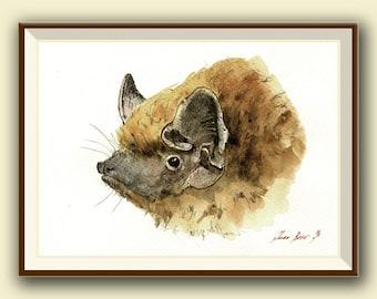 The parti-coloured bat or rearmouse (Vespertilio murinus)-Bat art -  Original watercolor painting- Juan Bosco
