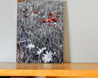 Orange Through the Grass - A3 Framed Print