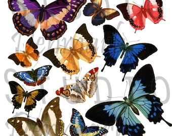 Vintage Butterflies Clipart Set - 12 png Butterflies - Commercial Use - Instant Download
