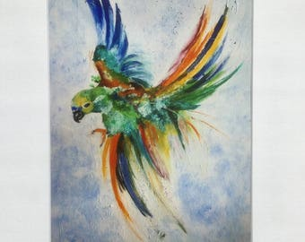 Acrylic print - colorful Parrot