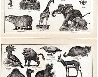 Animals 1900s Antique Book Prints