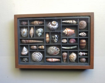 "Mixed media seashell art composition, ""28 Painted Sculptures in a dark gray box""."