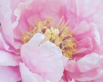 Pink Peony Print, Pink Peony Art, Peony Photograph, Peony Home Decor, Peony Print, Peony Wall Art, Pink Flower Wall Art, Peony Art Print
