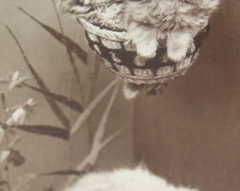 SALE Vintage RPPC Of Cats