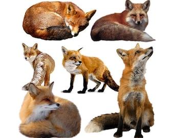 Fox overlay photo animal photoshop png