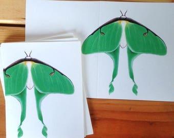 6 blank cards - Luna Moth