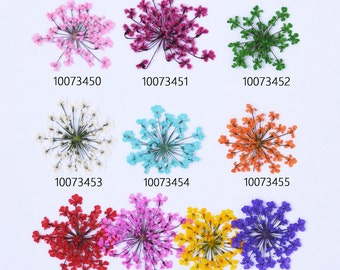 12pcs Dried Pressed Flowers for Crafting Real Botanical Jewelry 100734