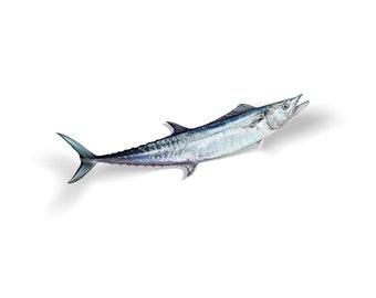 King Mackerel Decal, King Mackerel Sticker, Kingfish Decal, Kingfish Sticker
