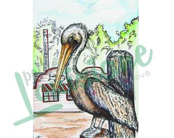 Pelican at Middendorf's