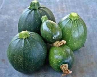 Round Zucchini Tondo Di Piacenza Summer Squash Italian Heirloom Seeds Non-GMO Naturally Grown Open Pollinated Gardening