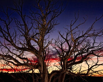 """Landscape Sunset Photograph Print  """"The Tree at Sunset"""" 8x10 Fine Art Photography, New Mexico Silhouette Photo"""