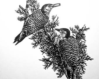 "Red Bellied Woodpeckers, hand carved woodblock print, 12""x16"""