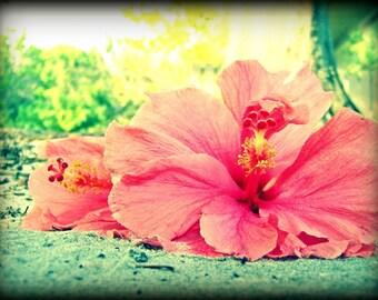 Hibiscus Love Fine Flower Art Photography Print 5x7 Print Pink Vintage Shabby Chic
