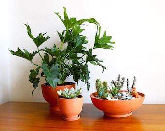Terra-Cotta Planters: Set of 3