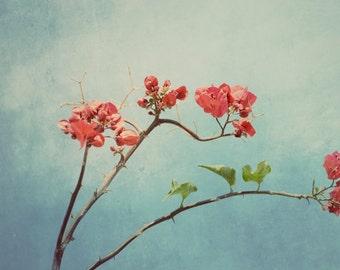 Botanical print, pink floral art, bougainvillea print, sky blue decor, nature art print, blue nusery decor, romantic art, fine art photo