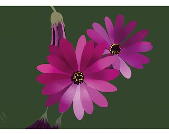 Flower Greeting Card, Blank, Dimorphotheca Design No 6021