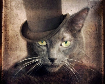 Gray Cat Photo - Grey Cats Russian Blue - Pet Portrait Top Hat Cat Lover Gift Wall Art Animal Photography Pet Portrait Print - Captain Grey