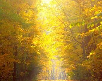Finger Lakes Golden Run