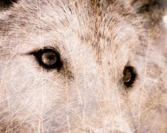 Wolf Photograph - Wildlife Home Decor Wall Art - Textured Wolf Fine Art Animal Photography Print