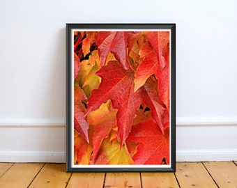 Autumn Tree Leaves,Art,Photo,Digital Download,Decor,Home,Office,Tropical,Dusk,Orange Art,Yellow Print,Leaves Photo,Leaves Print