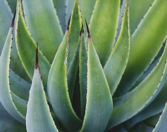 Agave Photo, Succulent Photo, Succulent Art Print, Agave Art, Green Wall Art, Botanical Print, Desert Art, Southwest Art, Abstract art