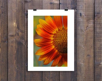 Red and Yellow Sunflower Fine Art Photograph